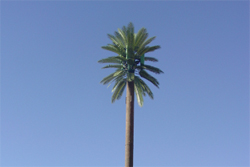 New-60-ft-Nello-Palm-Poles-3