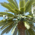 60-ft-Palm-Monopole-1