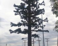 51-ft-pine-tree-monopole-monopine-1